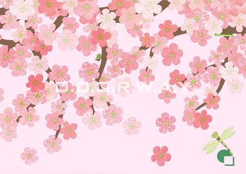 Giấy dán tường phòng ngủ màu hồng họa tiết hoa anh đào mẫu 07